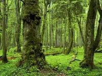 Bielovežský prales, Poľsko