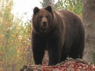 Časť medveďov vo vysokých tatrách sa zatiaľ neuložila na