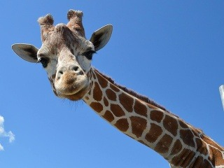 Najväčšie živočíchy sveta