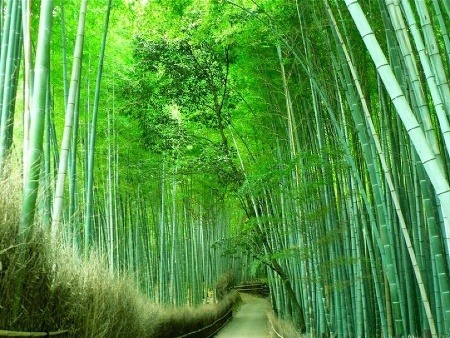 Bambusový les, Čína