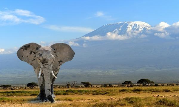 Slon v pozadí s