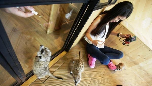 Little Zoo Cafe v
