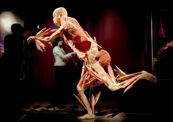 VýstavA ľudských tiel Body