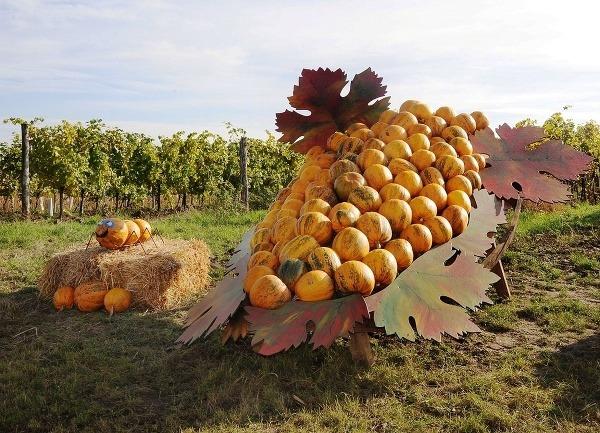 Vinárska jeseň v Dolnom