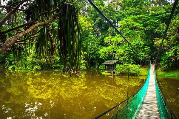 Divoké Borneo - posledný
