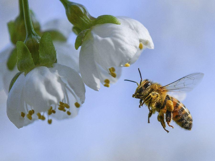 Usilovne pracujúca včelička