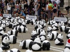 Papierové pandy