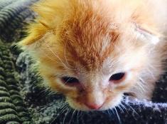 Zachránené mačiatka