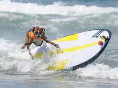 Štvornohí surfisti