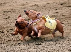Psie preteky