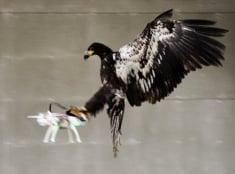 Orol versus dron