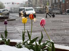 Colorado prekvapila snehová nádielka