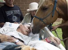 Paralyzovaní veterán si želal vidieť svojho koňa.