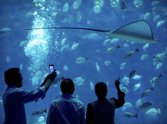 Akvárium v Číne
