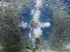 Potápač v akváriu Coex v Soule
