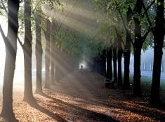 Prechádzka v rannej hmle