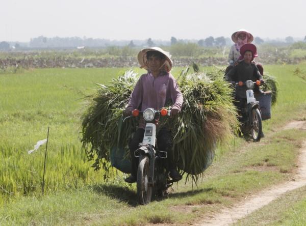 Kambodžskí roľníci