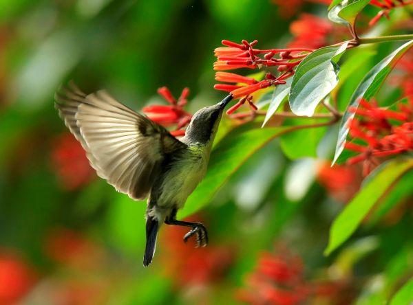 Kolibrík má smäd
