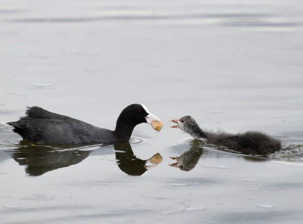 Mama kŕmi svoje mláďa