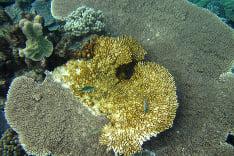 Podmorský svet