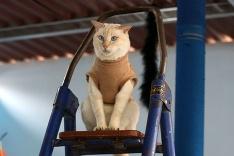 Mačka na rebríku