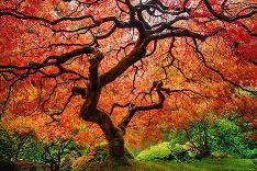 Farebná jeseň.