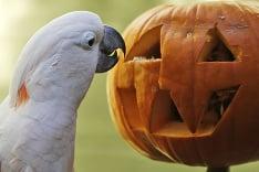 Zeppy z americkej zoo sa už nevie dočkať Halloweenu.