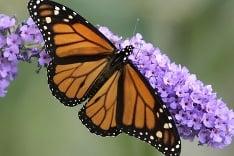 Nádherný motýľ