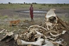 Pytliactvo v Afrike