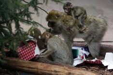 Vianoce v košickej zoo