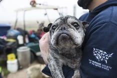 Američania zachránili 60 psíkov