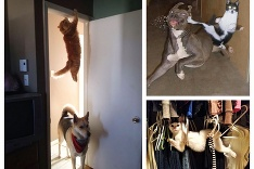 Ninja mačka