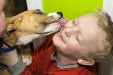 Psia láska