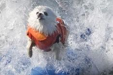 Ziggy, profesionálny surfista