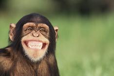 Dnes je Svetový deň ochrany zvierat!