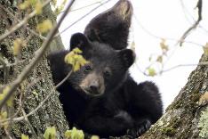 Dva zachránené medvedíky