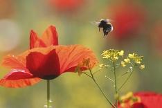 Včela má plno práce