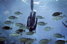 Potápač medzi rybami