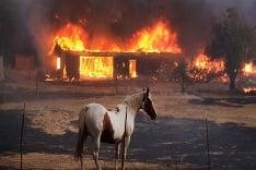 Lesný požiar v Kalifornii