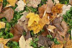 Pestrofarebná jeseň