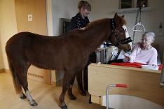 Hinrika Hoegesová so svojím poníkom navštevuje každý deň berlínsku nemocnicu, aby povzbudila umierajúcich pacientov.