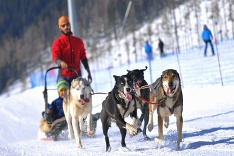 Snežné psy v Tatrách