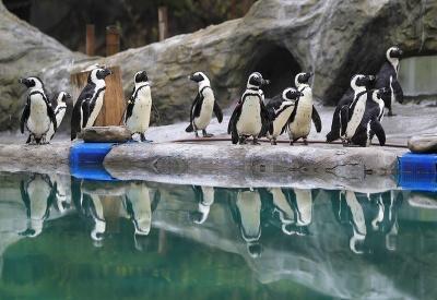 Tučniaci pri jazierku
