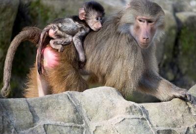 Život v Zoo