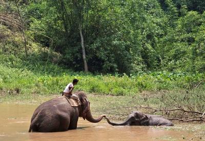 Slon uviazol v močiari