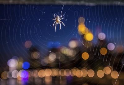 Pavúčia sieť