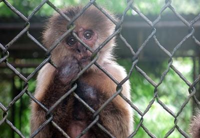 Smutná opica v ZOO