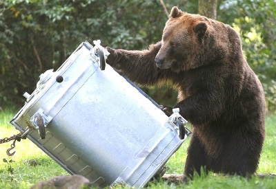 Medvedí boj s kontajnerom