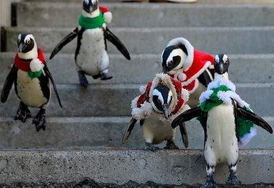 Vianočné tučniaky