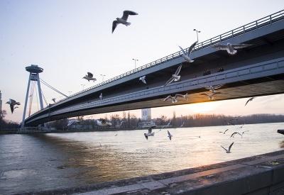 Čajky nad Dunajom